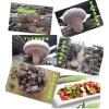 大量供应椴木香菇