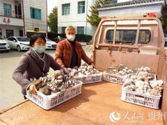 """黔西县:500斤食用菌暖了战""""疫""""一线干部的心 ()"""