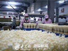 直击复工|释放60%产能 山东雪榕日供鲜菇260吨 ()