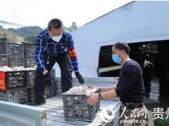 贵州紫云:爱心人士捐赠3000斤食用菌 共抗疫情 ()