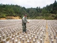 从江:食用菌种植区复工复产忙 ()
