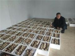 西乡800亩大球盖菇因疫情受困急需销售! ()