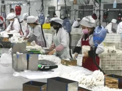 三都县:抗击疫情不误农时 食用菌生产顺利推进 ()