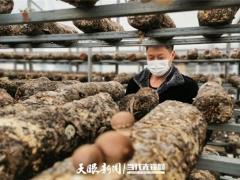 贵州施洞镇疫情防控不误生产 26万棒食用菌稳定出菇! ()