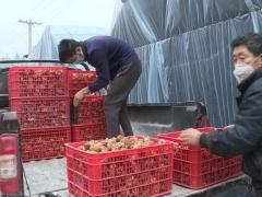贵州道真县:有序组织食用菌园区复工复产 ()