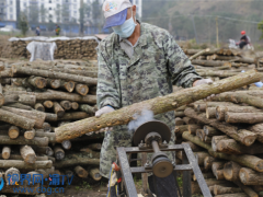 重庆云阳:启动80万段黑木耳钻孔工作 ()