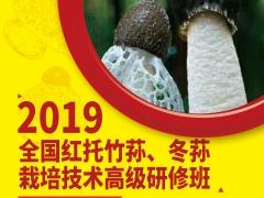 """""""2019全国红托竹荪、冬荪栽培技术高级研修班"""" 通知"""