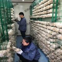 甘肃省betvlctor伟德培菌架 大棚养殖蘑菇架 工厂化出菇房网格架