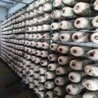 安徽省betvlctor伟德网格架 杏鲍菇出菇网格 猴头菇可移动出菇架
