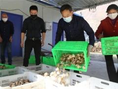 """留坝:疫情期间食用菌产业产销两旺""""开门红"""" ()"""