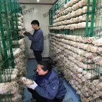 大棚养殖蘑菇架 金针菇层架平铺网格片 灵芝出菇价格