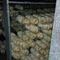 吉林蘑菇出菇架网格架厂家蘑菇养菌层架出菇架定制