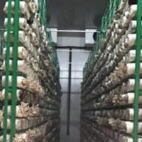 河北厂家定制香菇出菇架子尺寸
