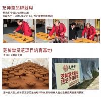 灵芝原材料生产基地 灵芝粉  灵芝片