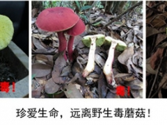 预防野生蘑菇中毒的消费提示 ()