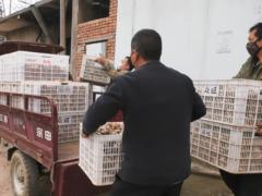 湖北安陆:解决香菇积压 托起扶贫产业 ()