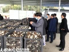 贵州省农科院羊肚菌高产示范 大面积亩产393.2公斤 ()