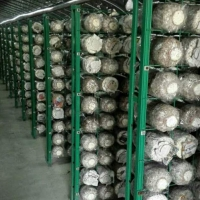 蘑菇种植架厂家 绿色包塑食用菌网格架 出菇房菌类养殖网格