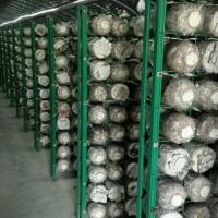 食用菌网格网架生产厂家 发菇房出菇生长架 灵芝养殖架