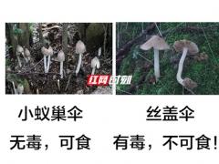 又到了野生蘑菇疯长的季节 对比图来啦! ()