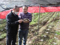破解菌渣难题,猕猴桃树下种羊肚菌带动农户增收 ()