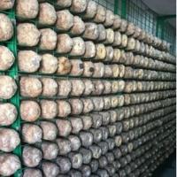 蘑菇网架a东莞蘑菇网架a蘑菇网架现货厂家