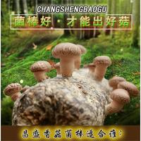 出口香菇菌棒厂家批发 河南昌盛基地优质香菇菌棒出售厂家直销