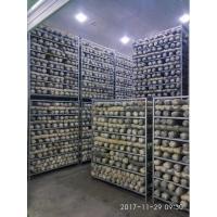 批发香菇菌棒 菌棒批发厂家直销 出菇快 产量高