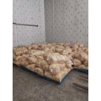 黄金针菇(80斤装)