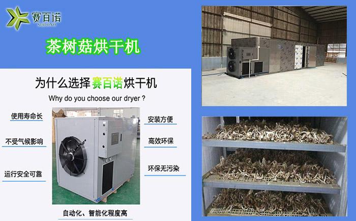 重庆茶树菇烘干机
