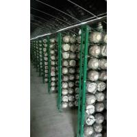 食用菌网格架,出菇架,靠谱厂家,河北安平浩璟实体老厂