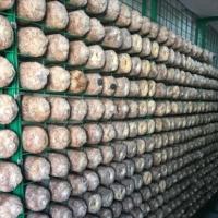 蘑菇养殖架 食用菌出菇架 工厂化出菇房网架 蘑菇菌架