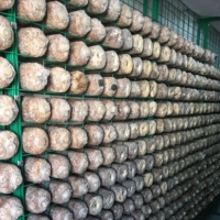 蘑菇网片生产厂家 食用菌出菇网格 杏鲍菇出菇网格架
