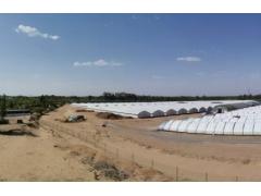 陕西榆林:首次实现北方地区人工种植羊肚菌