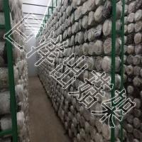 食用菌养菌架 2*5m 食用菌出菇网格 平菇专用架子
