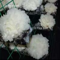 平菇网格架金针菇养菌架养菌层架出菇架养殖菌菇铁丝网格