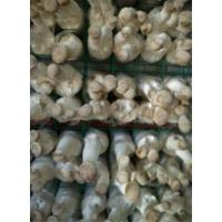 食用菌网格架,出菇架,培养架靠谱厂家