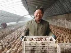河北邢台:信都区小香菇撑起致富大天地